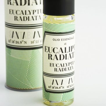 Eucalyptus Radiata essential oil-1